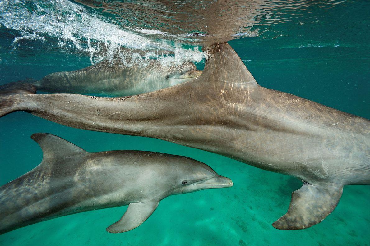 Delfines semicautivos