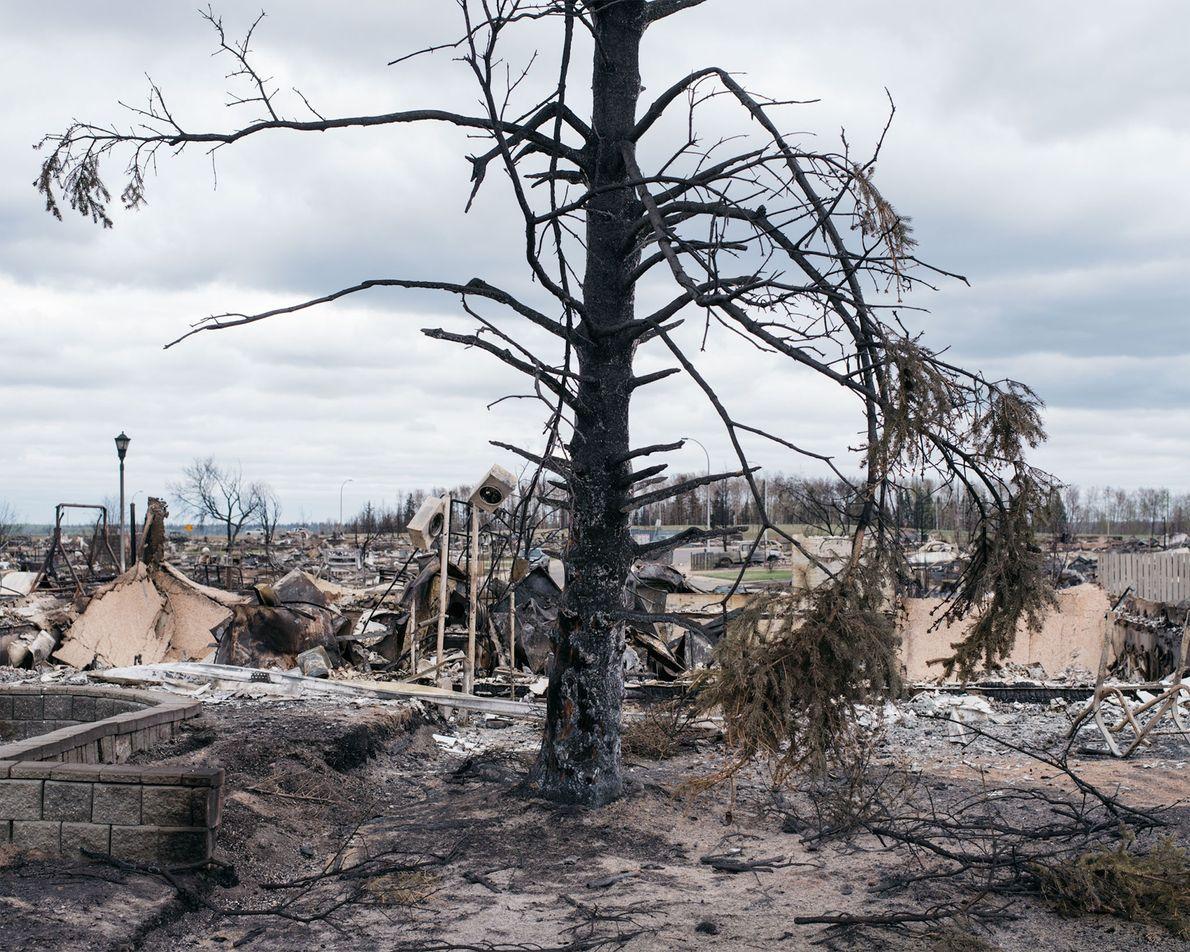 Un árbol quemado