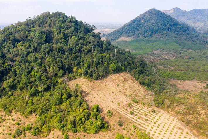 Bosques de Preah Vihear