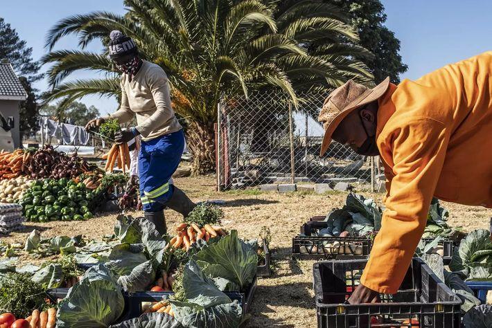 Activistas de Johannesburgo distribuyen verduras orgánicas