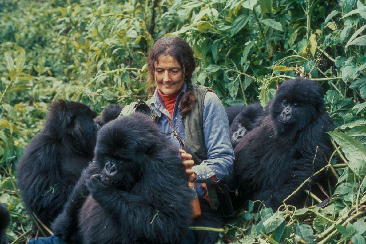 Fossey aceptada por los gorilas