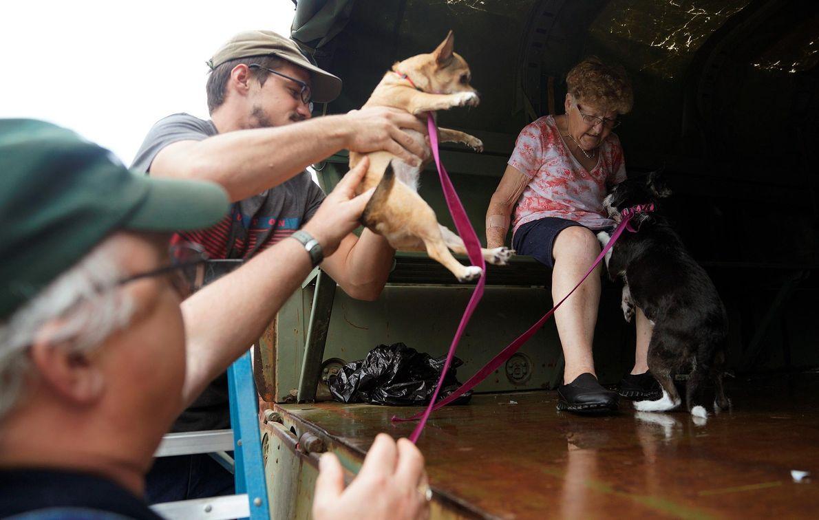 Las mascotas evacuadas