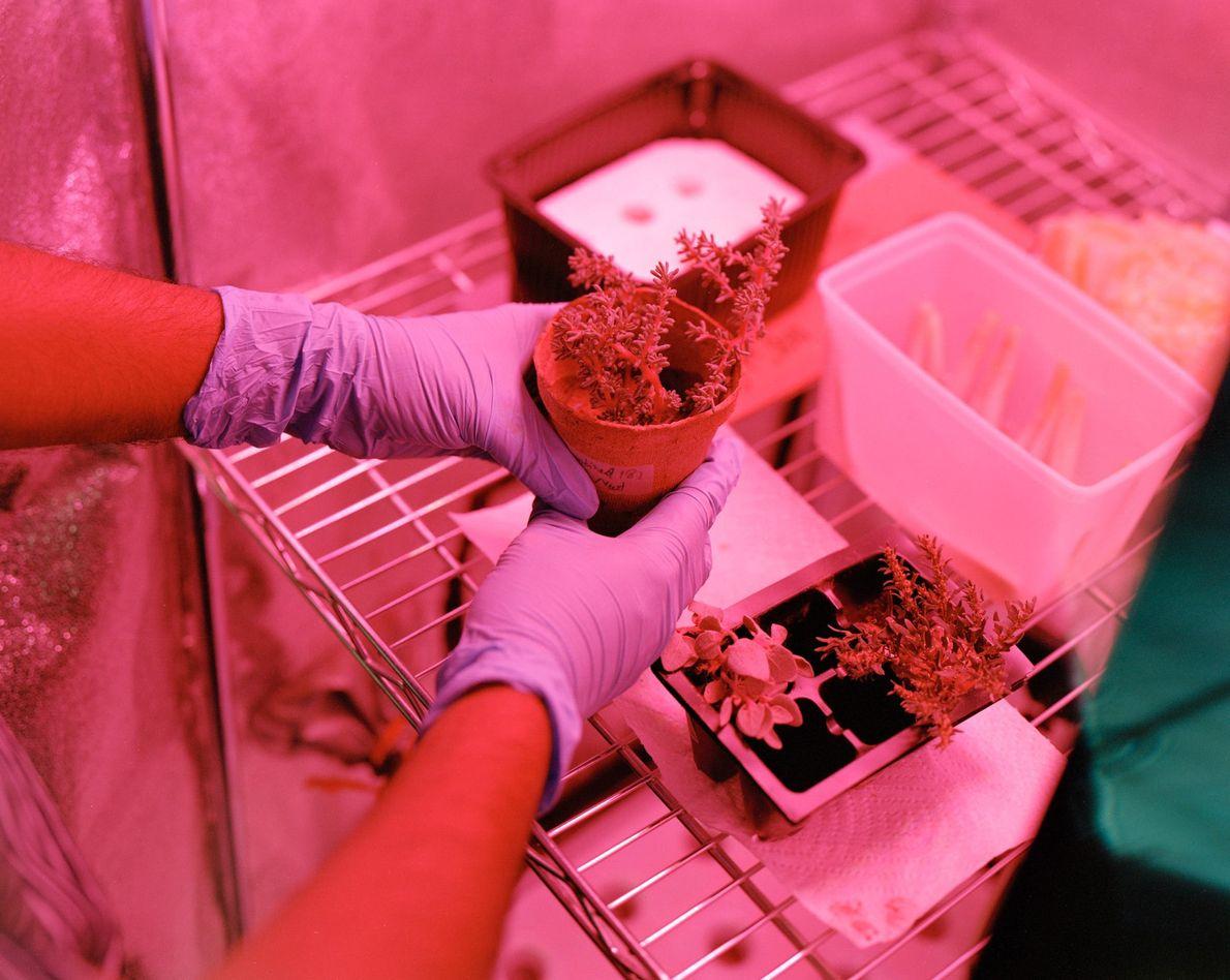 Muestras de plantas