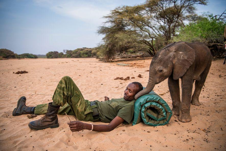 Los guerreros Samburu encontraron a esta elefanta bebé atrapado en un pozo excavado a mano. Como ...