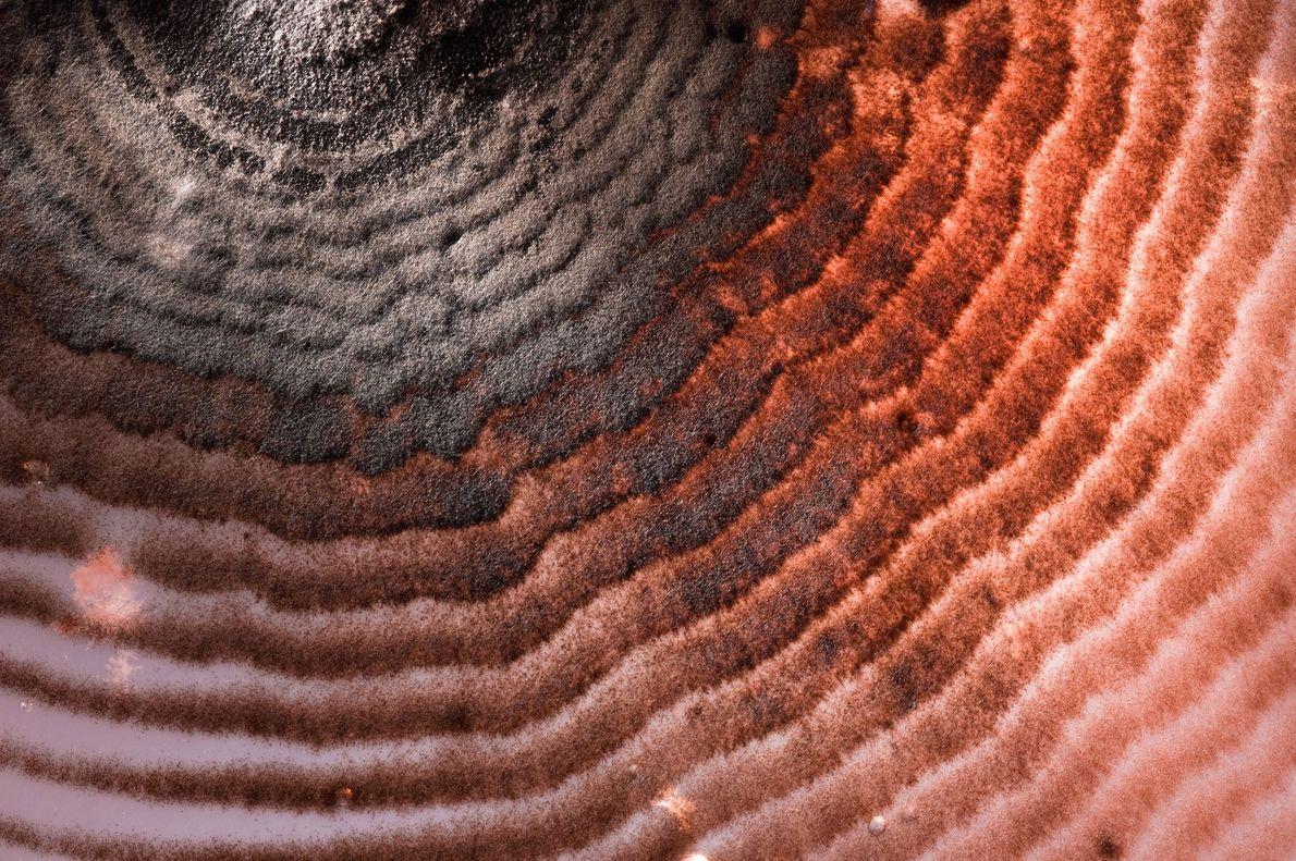 Los hongos del suelo