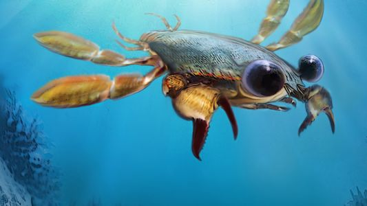 ¿Cómo desarrollaron los cangrejos su aspecto «cangrejil»?