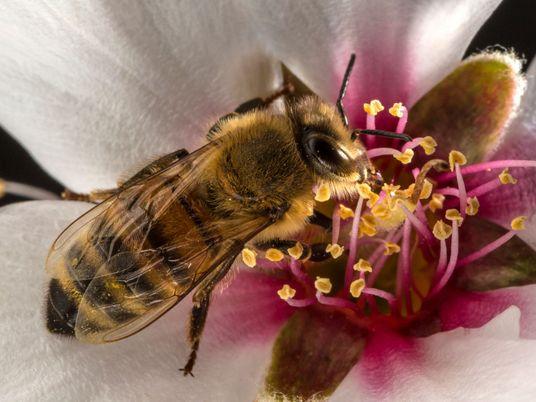 Sin insectos, nuestras vidas peligrarían