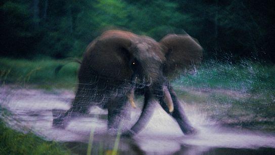 Elefante cargando