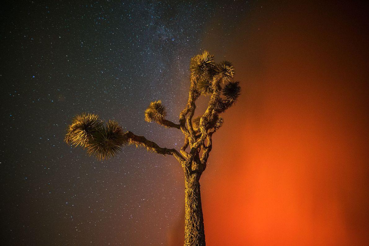 El incendio del bosque de San Bernardino
