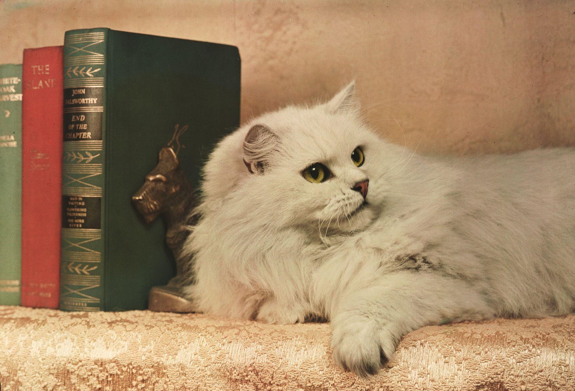 Fotografías antiguas de gatos mimados