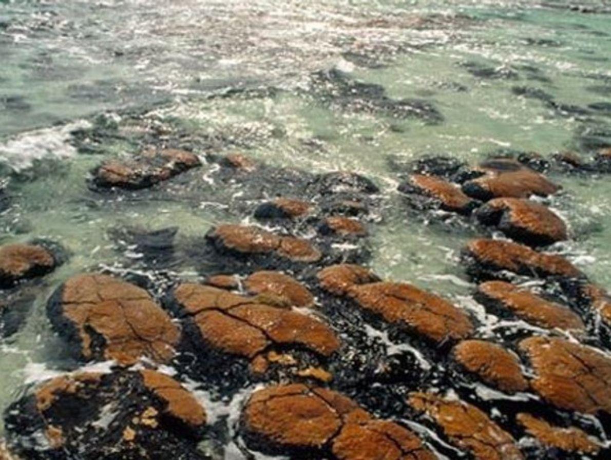 Antiguos arrecifes