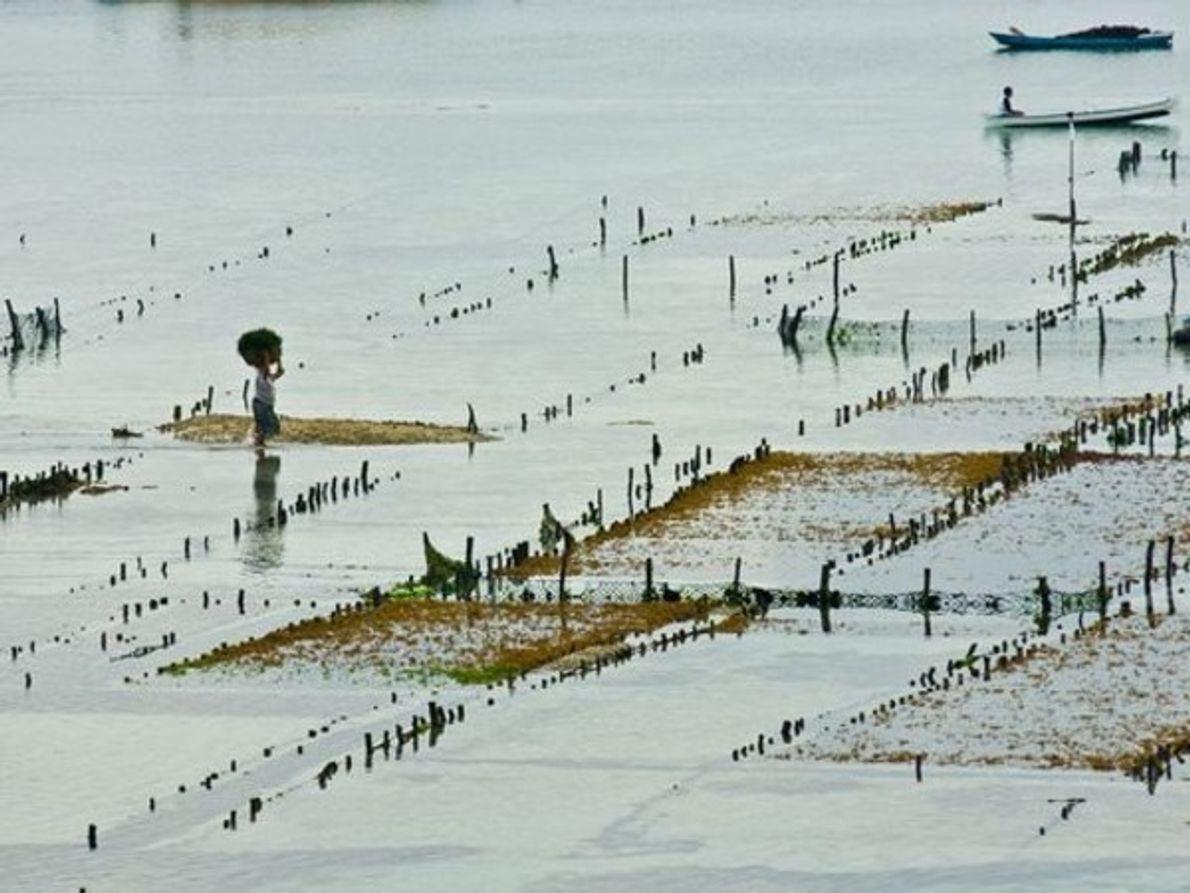 En los cultivos de las charcas, las algas han pasado a ser algo noble entre los …