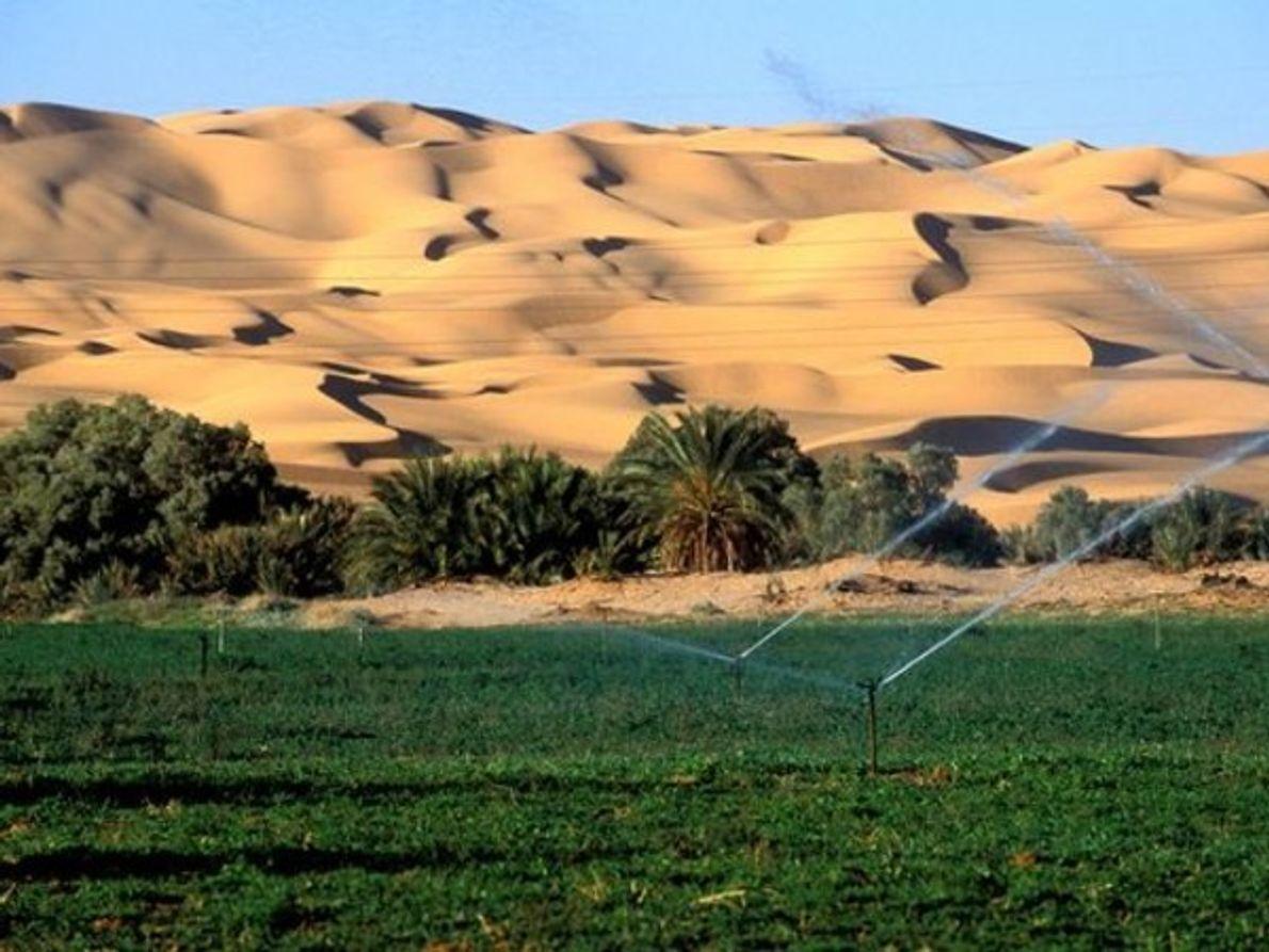 El cambio de sistemas de riego y la tendencia a hacer verdes los desiertos está ayudando …