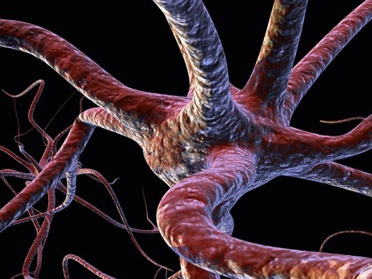 Caminos de las neuronas cerebrales