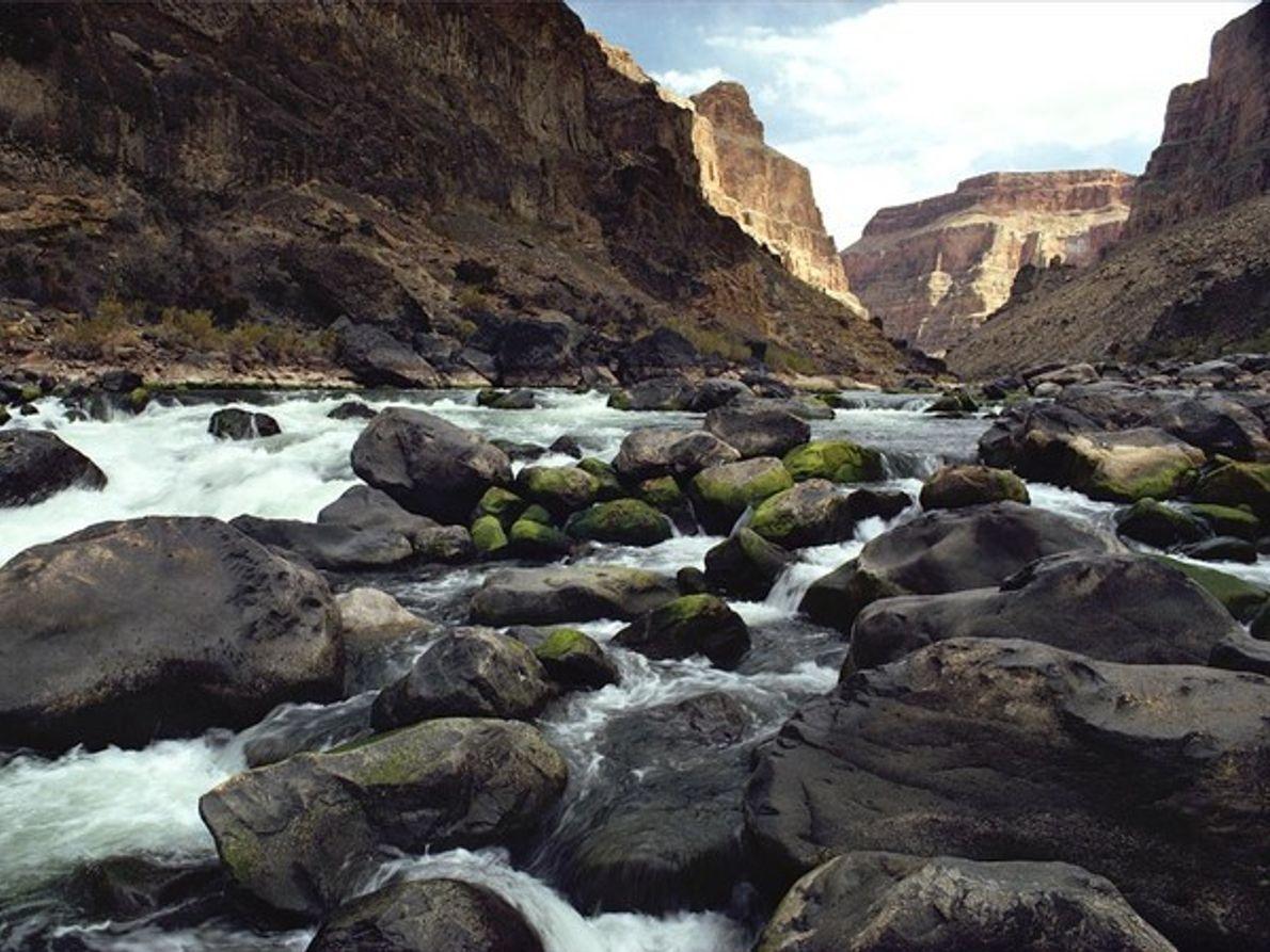 Cauce del río Colorado