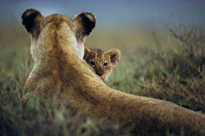 Protección materna