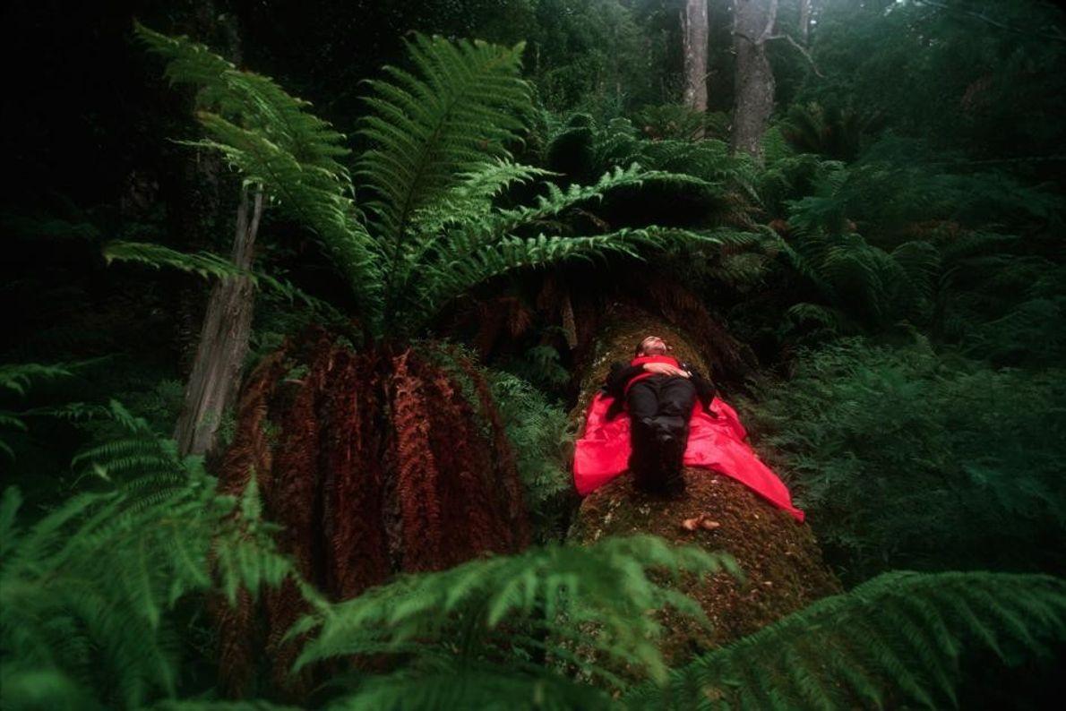 Pausa en el bosque