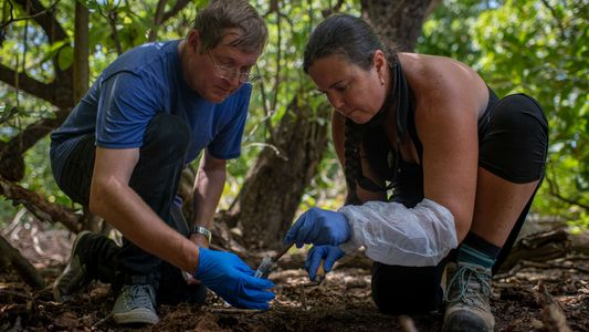 La búsqueda de restos de Amelia Earhart en Nikumaroro