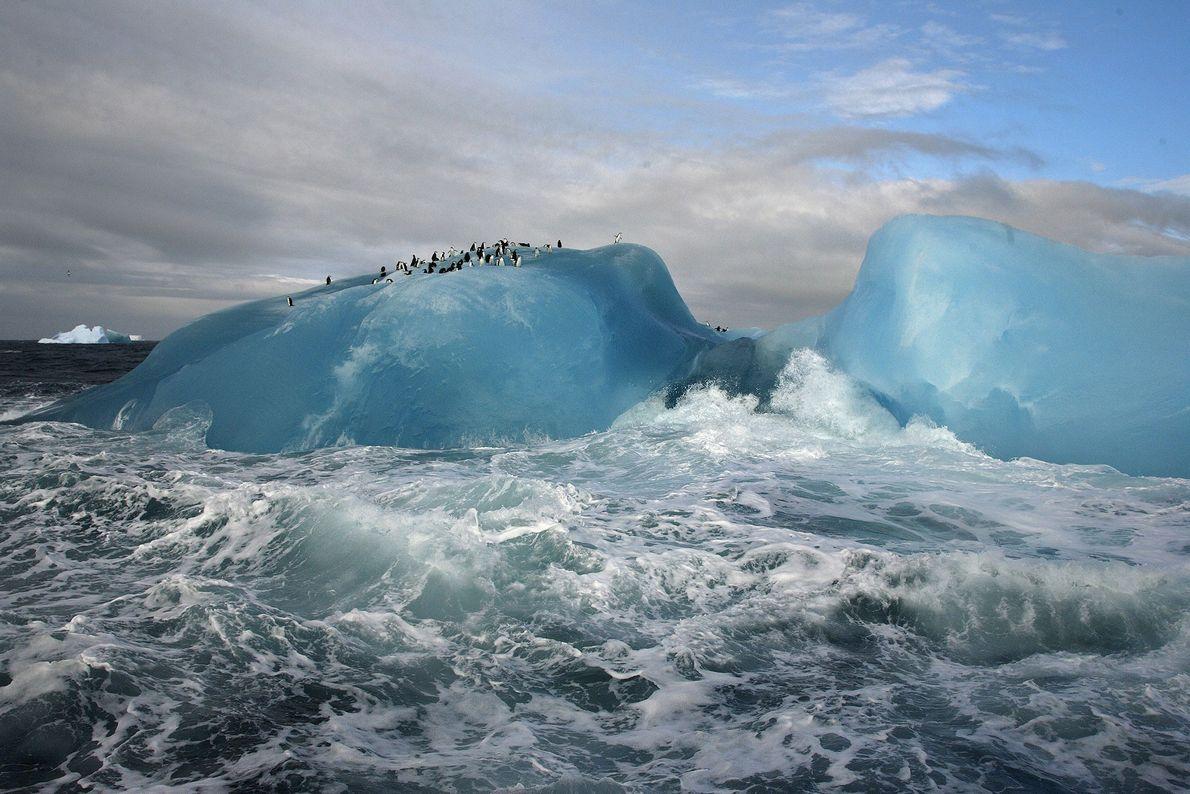 Isla Candelaria, Antártida