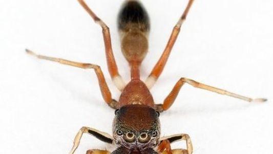 Nuevas especies descubiertas en Borneo