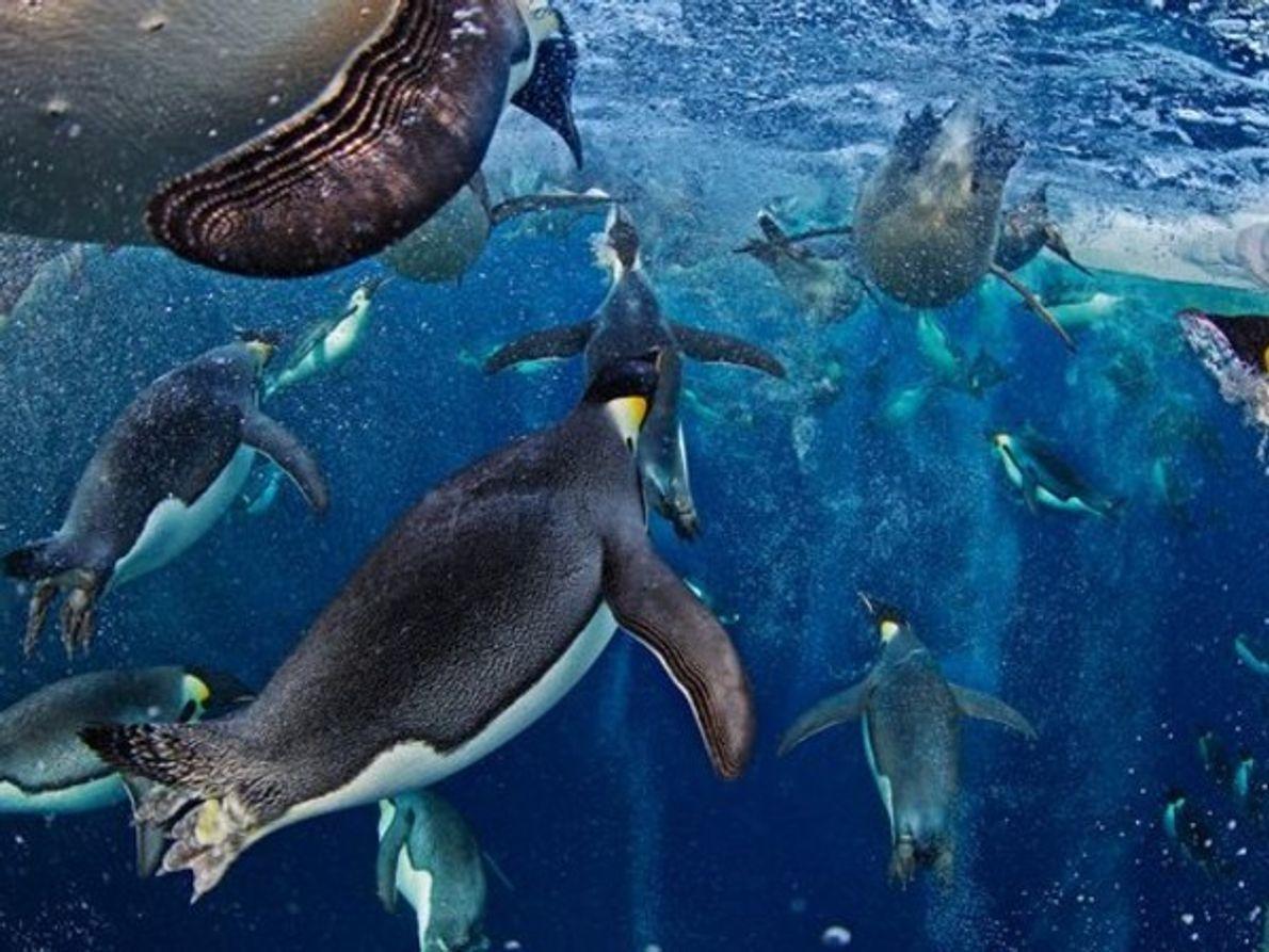 LAS MEJORES FOTOS DE ANIMALES DE 2012