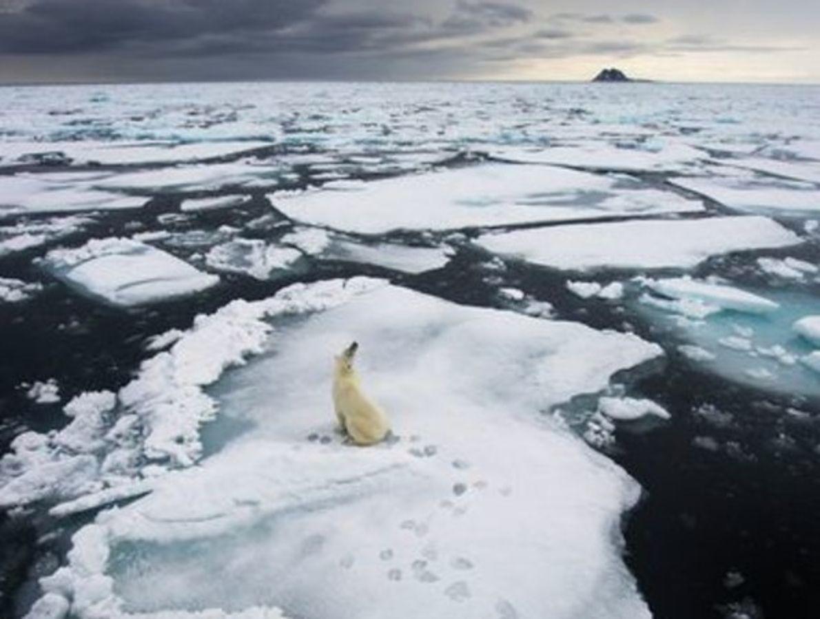 LAS MEJORES FOTOS DE ANIMALES DE 2012 PARTE 2