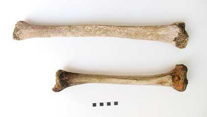 Encontrado un esqueleto de gigante de la antigua Roma