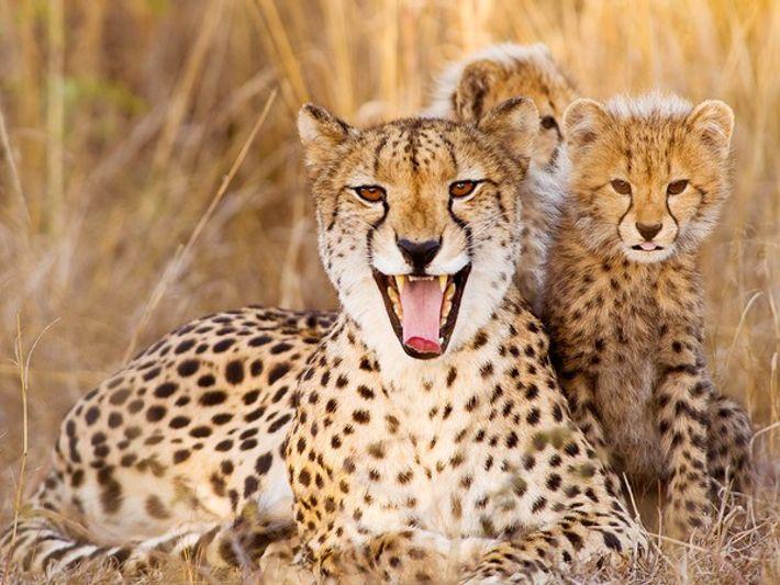 Madre guepardo con su cachorro