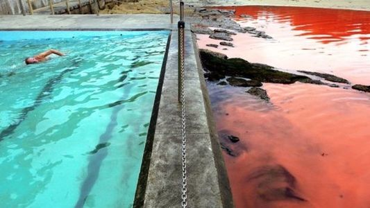 Océanos de sangre en Australia