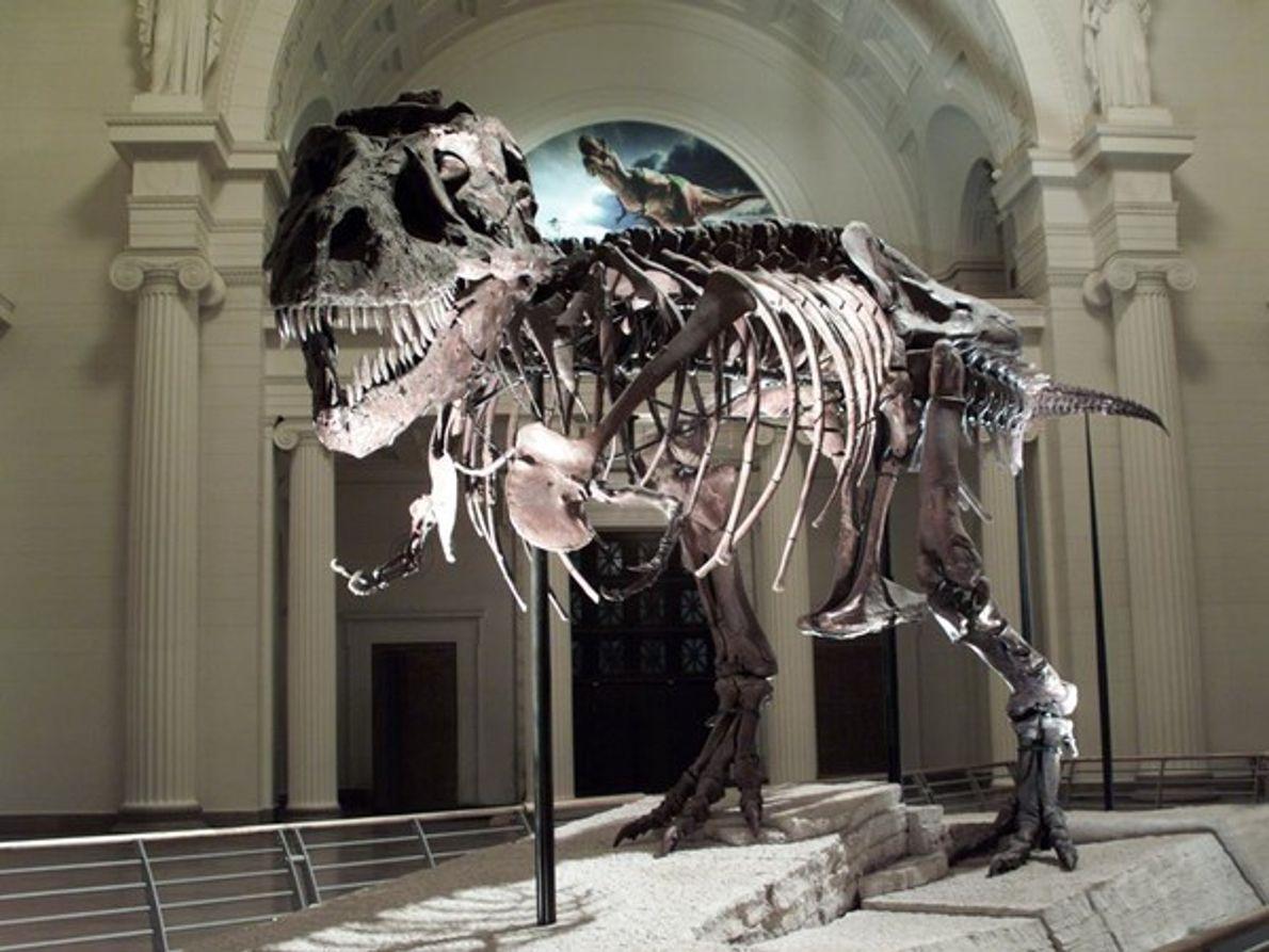 Tyrannosaurio Rex