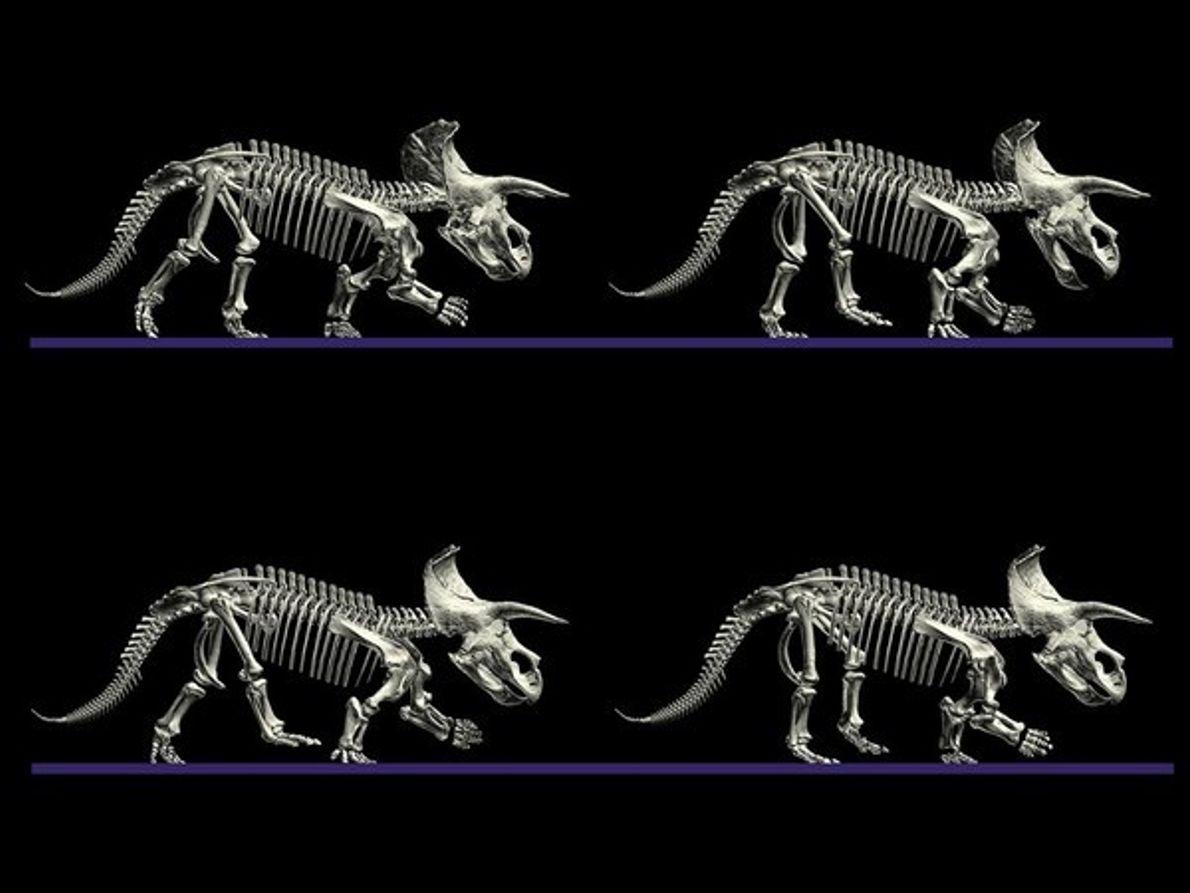 Movimiento del triceratops
