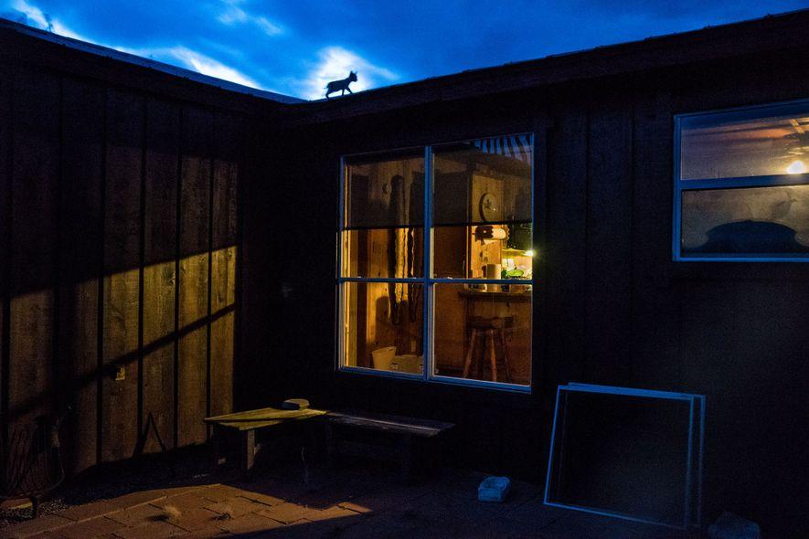 La estructura del rancho proporcionó mucho más que un simple refugio de las cálidas tardes; las crías también lo usaban como gimnasio y patio de juegos.