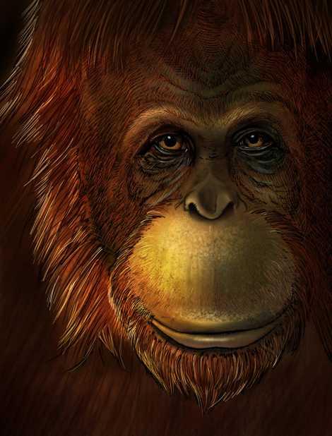 Representación artística de Gigantopithecus blacki.