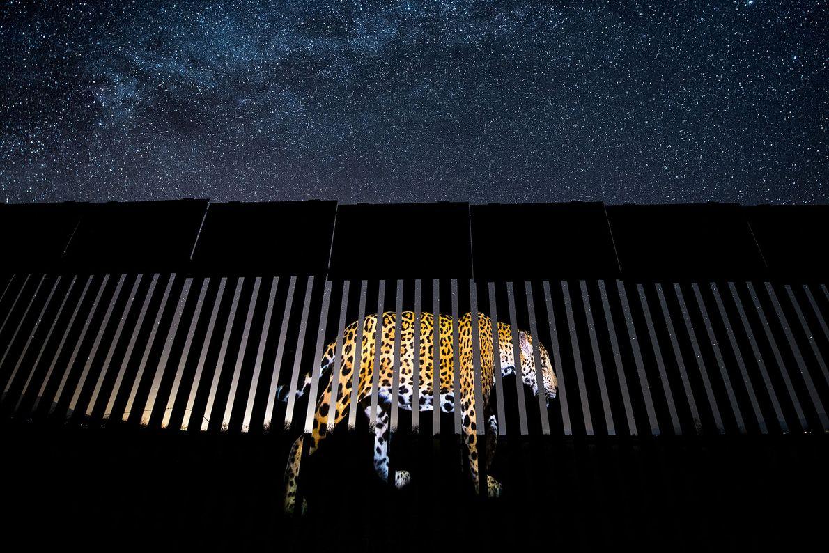 Jaguar en el muro, Alejandro Prieto