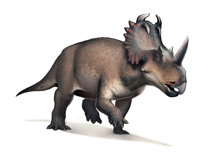 Reconstrucción digital del Centrosaurus apertus.