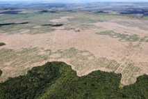 La deforestación, la destrucción de hábitats y la intensificación insostenible de la producción animal son algunas ...