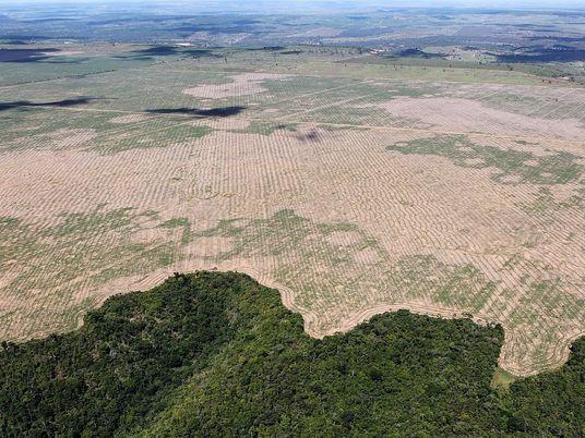 La deforestación del Amazonas alcanza niveles históricos debido al consumo de carne