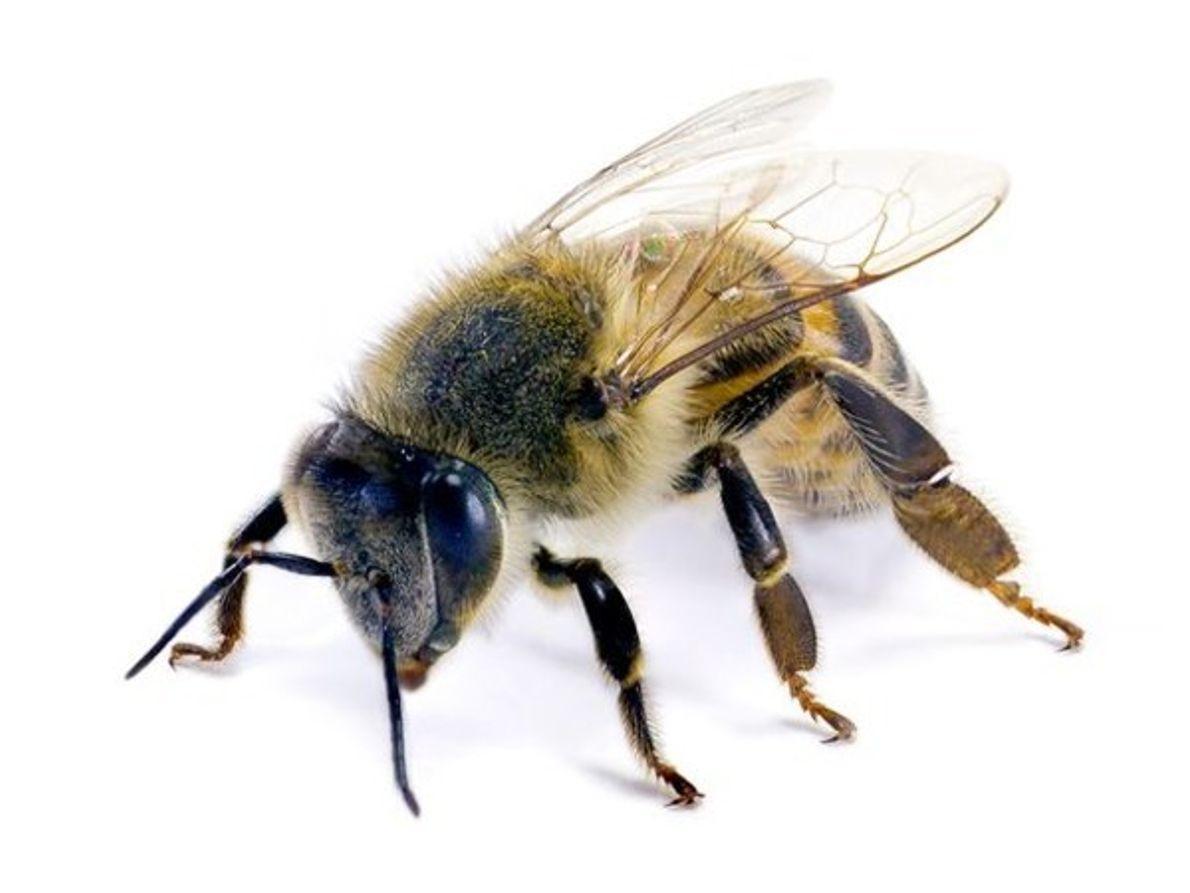 El ataque de la abeja asesina
