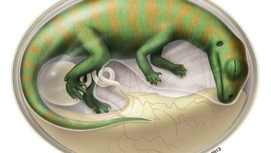 Los bebés dinosaurios vivían flexionados dentro de sus huevos