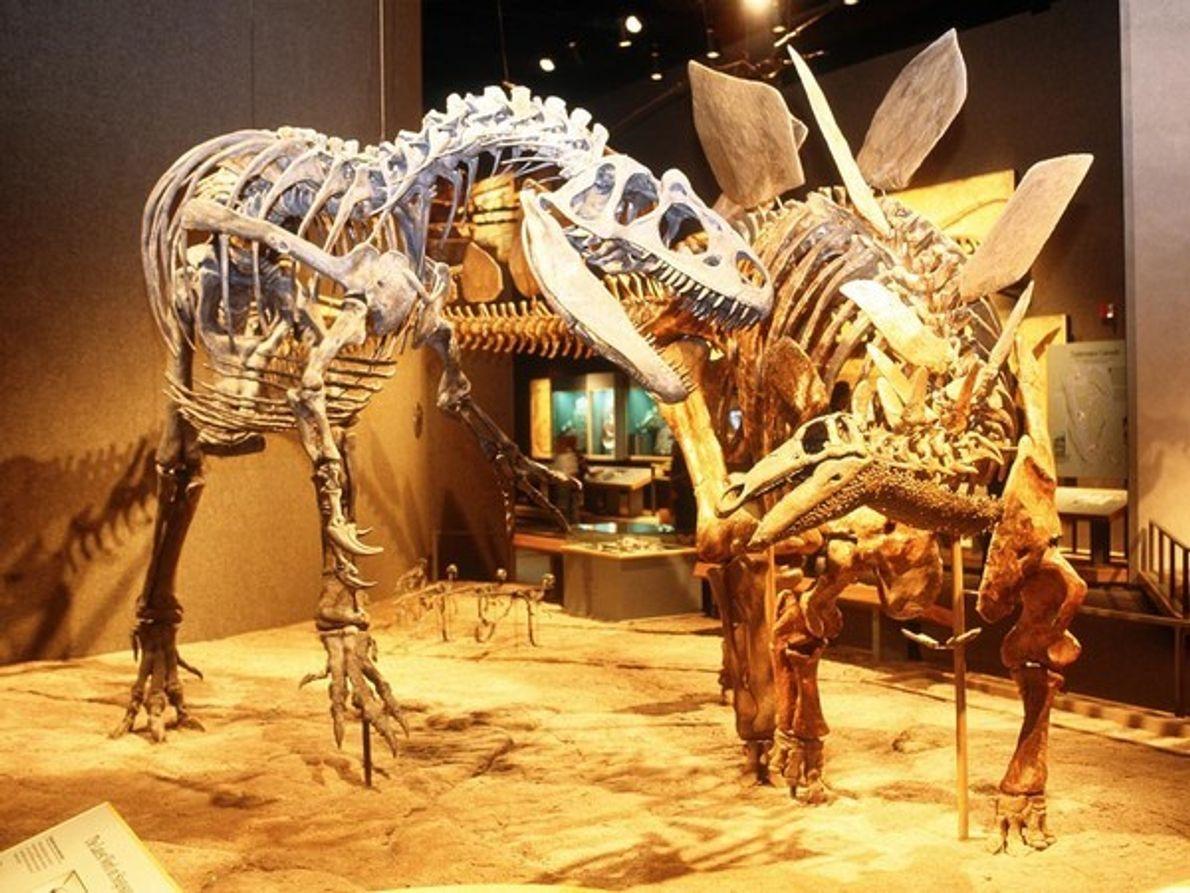 Fantasmas de una época anterior, un Alosaurio y un Estegosaurio se preparan para la batalla en …