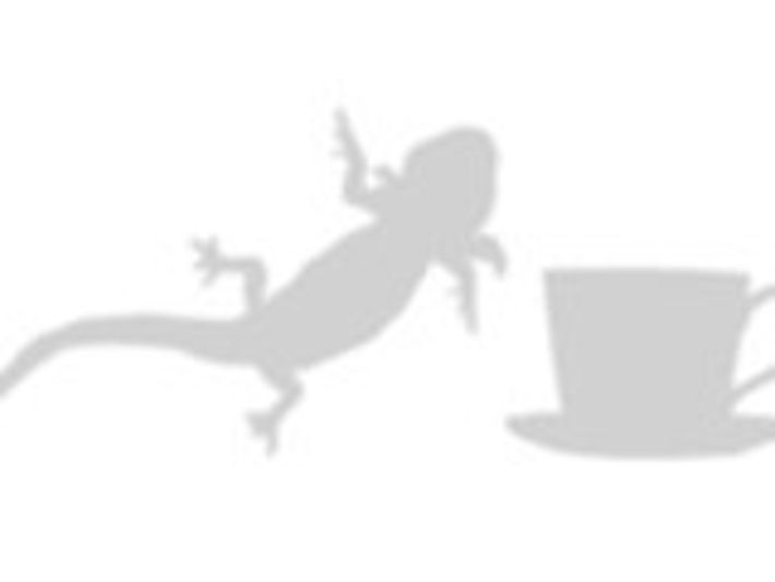comparación del axolote mexicano