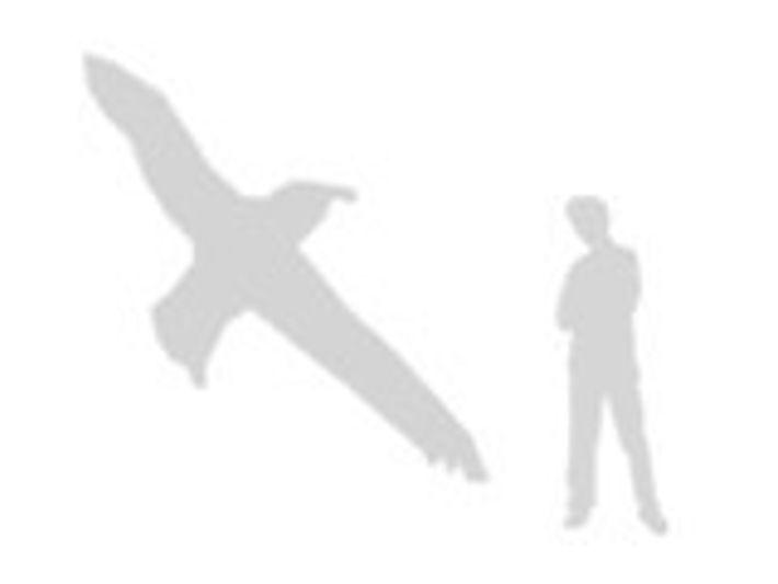 comparación del albatros