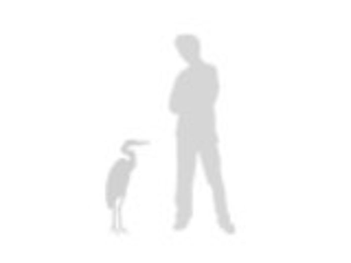 Comparación tamaño con un humano