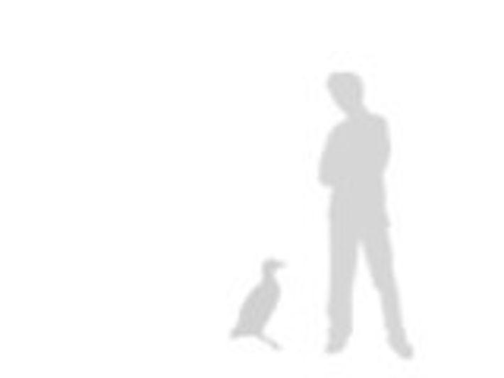 Tamaño comparado con un humano