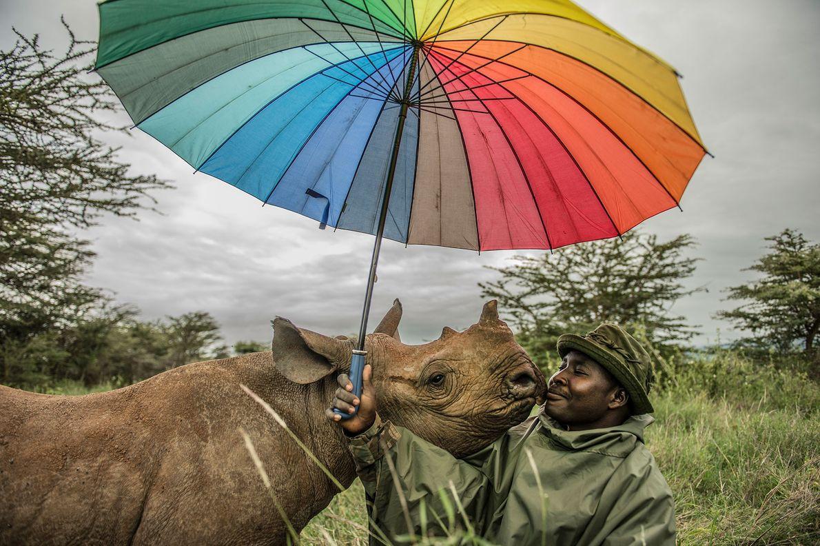 Un rinoceronte negro