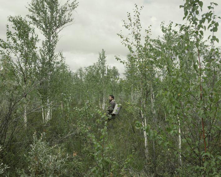 Dmitriy Polevchuk recoge arándanos