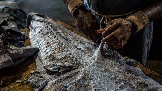 La caza de aligátores en Florida: un negocio que atrae a delincuentes