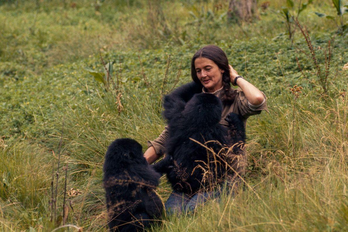 Fossey juega con Pucker Puss y Coco