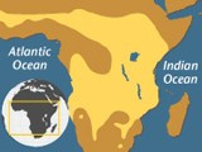 Territorio del león africano