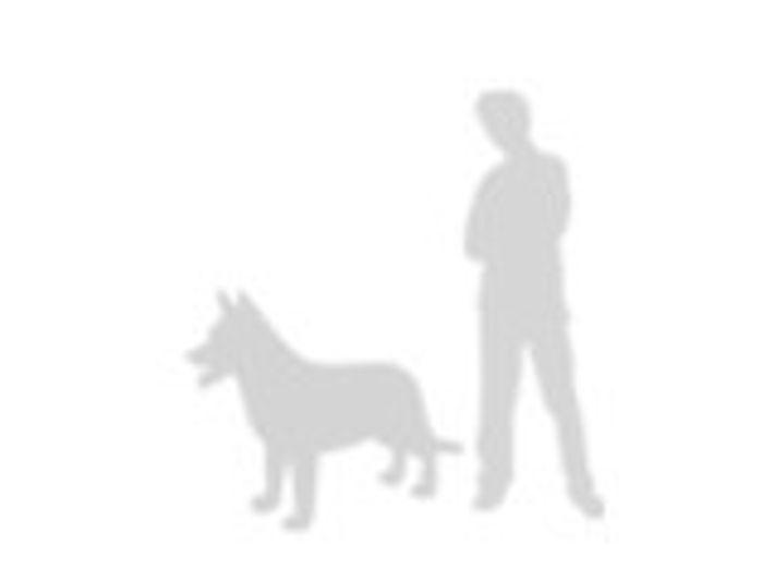 Perro doméstico